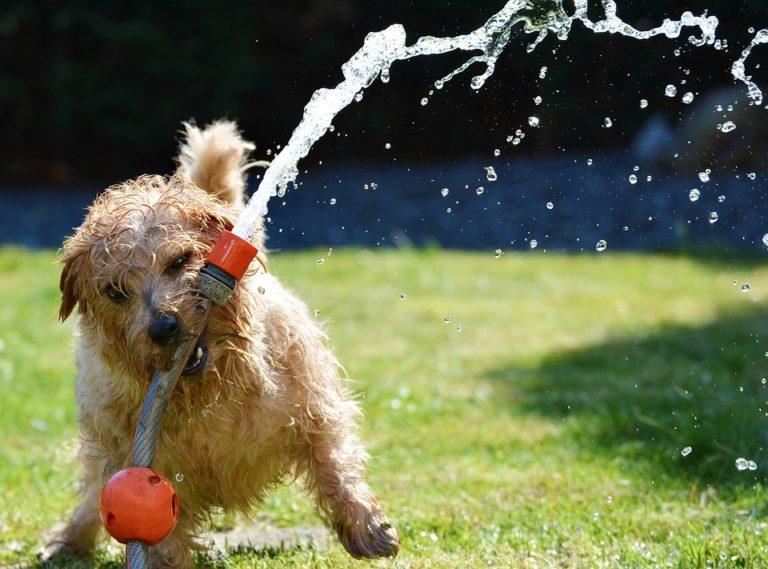 Plac zabaw dla psów na Saskiej Kępie